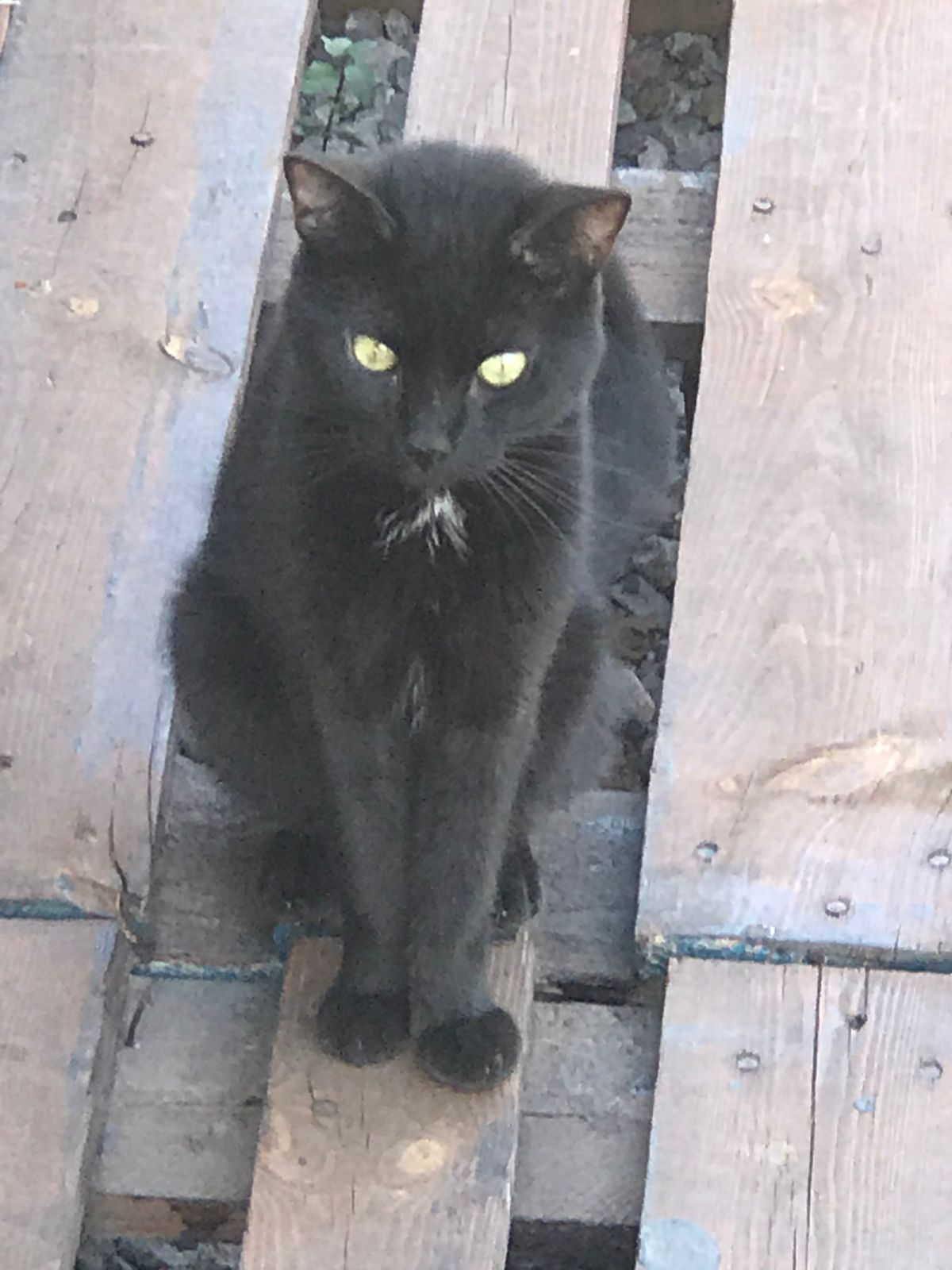 Passa cat rescued by Rescue Strays-1