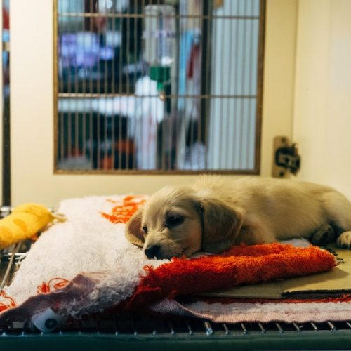 Why You Should Adopt A Pet Vs. Buying