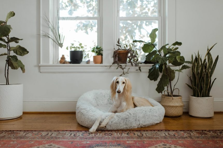 How To Take Care Of A Dog In An Apartment