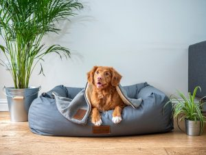 Dog Care Tips: Brown Dog on Grey Bed