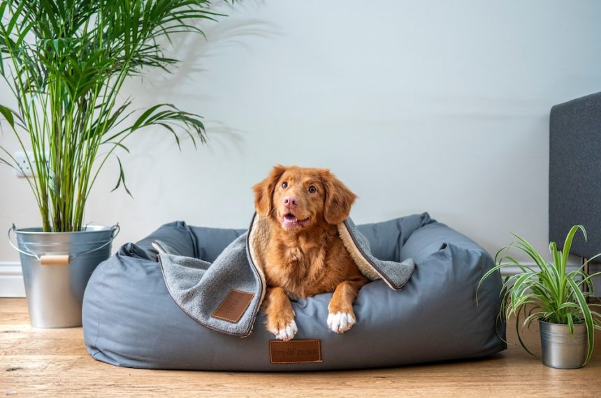 Dog Care Facts And Tips