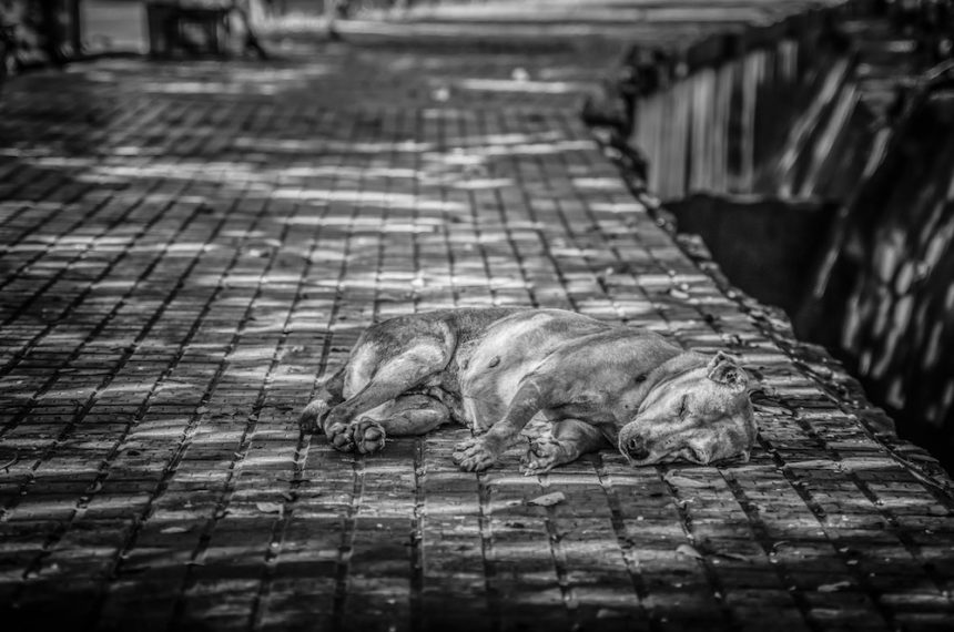 4 Facts About Animal Homelessness and Pet Abandonment
