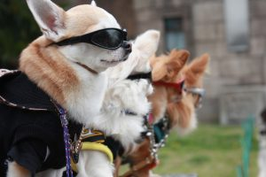 Cool Dog Facts