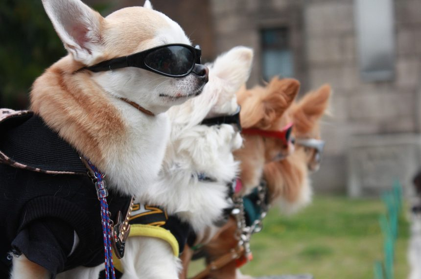 5 Cool Facts About Dogs