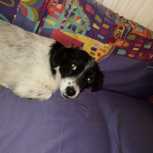 Boncuk - Mid Age, Small Size Breed, Female Dog. Rescued by Rescue Strays-4