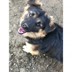 Cash - Mid Age, Small Size Breed, Male Dog. Rescued by Rescue Strays6