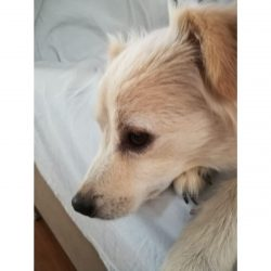 Finduk - Mid Age, Small Size Breed, Male Dog. Rescued by Rescue Strays.-1
