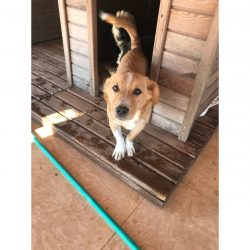Noble - Mid Age, Small Size Breed, Male Dog. Rescued by Rescue Strays-8